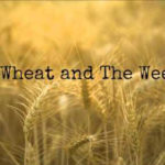 """Matthew 13:24-30 """"The Wheat & The Weeds"""""""